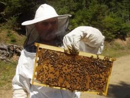 Δωρεάν σεμινάρια μελισσοκομίας